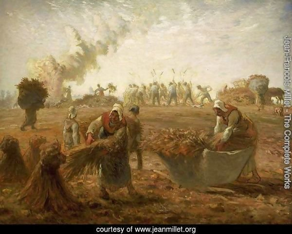 Buckwheat Harvest Summer